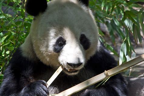 Panda Bip 中国ってそろそろ崩壊するの bipブログ