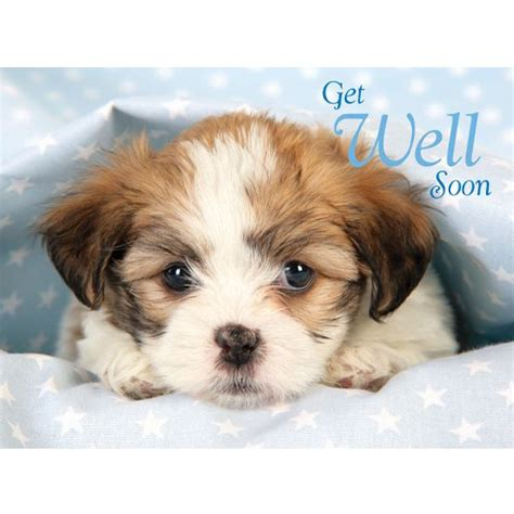 get well soon puppy 17 best images about get well feel better on recovery clip and get