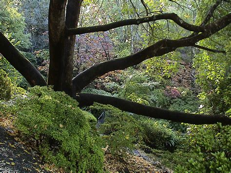 Mount Lofty Botanic Gardens File Mount Lofty Botanic Garden Autumn4 Jpg Wikimedia Commons