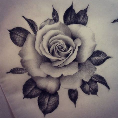 drawn rose black gray rose pencil and in color drawn