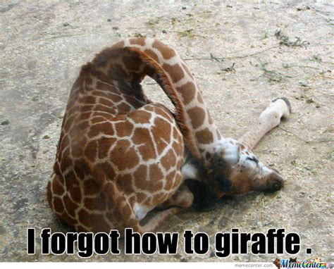 Giraffe Meme - go home giraffe by williams meme center