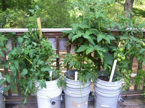 Learn How To Make A Self Watering Tomato Planter Your Self Watering Tomato Planter