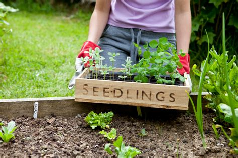 Top Tips On Creating Your Own Kitchen Garden Starting A Fruit And Vegetable Garden