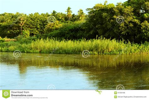 Reed Plants And River Stock Photo - Image: 61593186 Horse Background Clipart