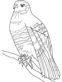 dessin oeil de faucon
