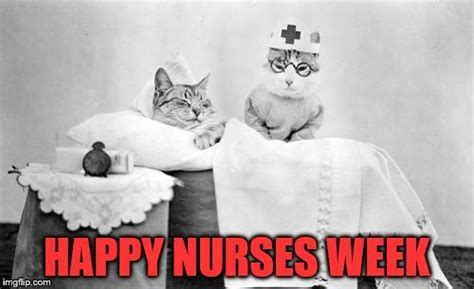 Happy Nurses Week Meme - cat nurse imgflip