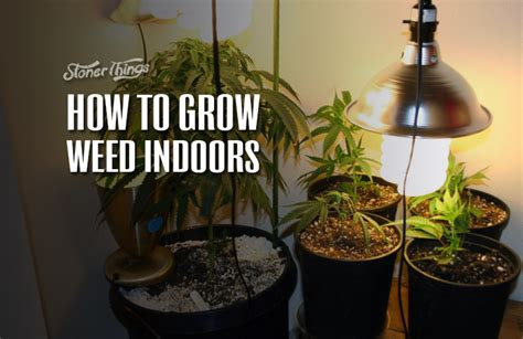 how to a to indoors how to grow indoors stoner things