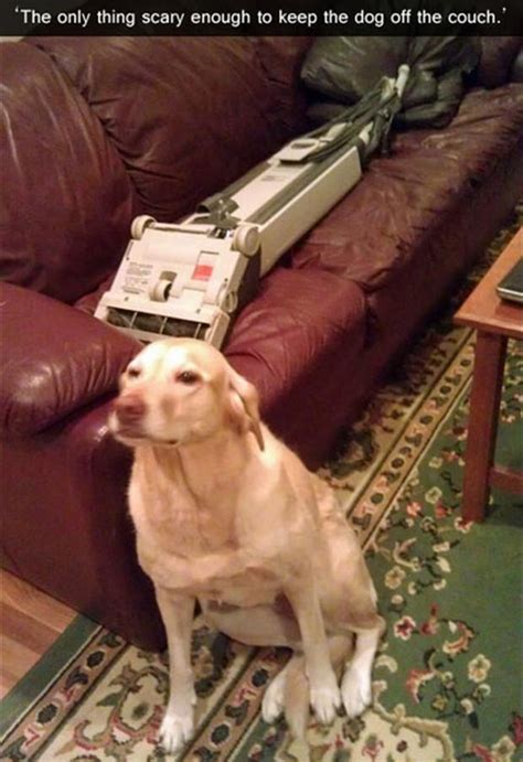 how to keep dog off bed use a vacuum to keep your dog off the couch realfunny