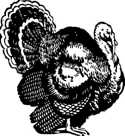 turkey line art clipart best best turkey clipart black and white 1511 clipartion com