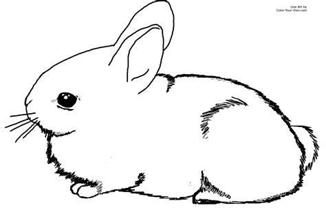 blank bunny coloring page easter bunny clipart free draw to color