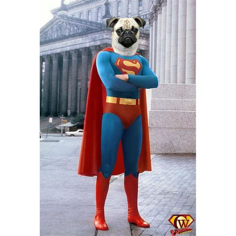pug in superman costume overview for ertb
