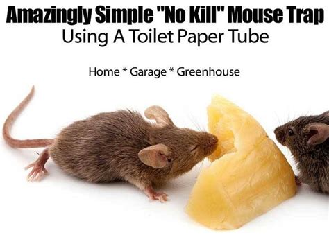 no kill mouse trap home remedies mouse