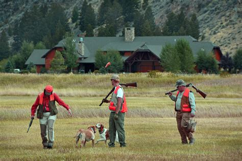 how to a to pheasant hunt pheasant photography for montana lodge