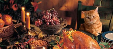cat eaten wallpaper paste thanksgiving pet safety can our pets eat our favorite