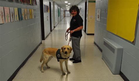 what is the best shoo for puppies milo makes 14 seeing eye dogs trained at cedar hill elementary school news tapinto