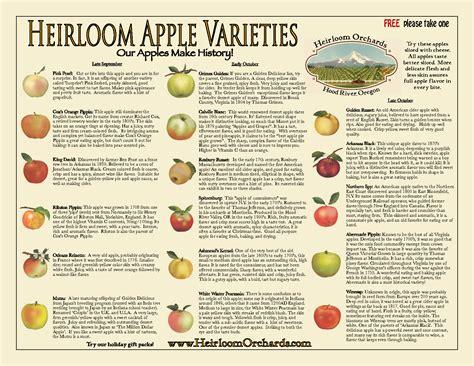 apple varieties heirloom apple varieties a small selection variety id