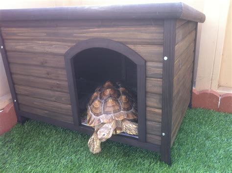 sulcata tortoise house review boomer george log cabin dog house for a red foot and sulcata tortoises