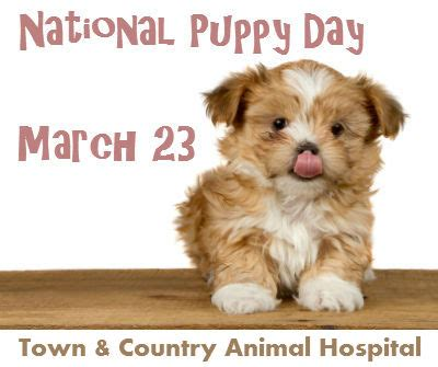 when is national puppy day the country veterinary hospital veterinarian puppy care in naples veterinarian naples
