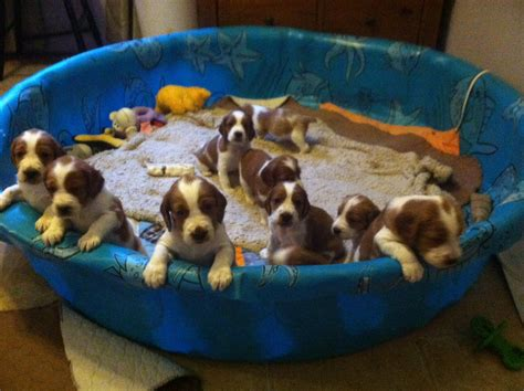 puppies in pool theboylindsay u theboylindsay reddit