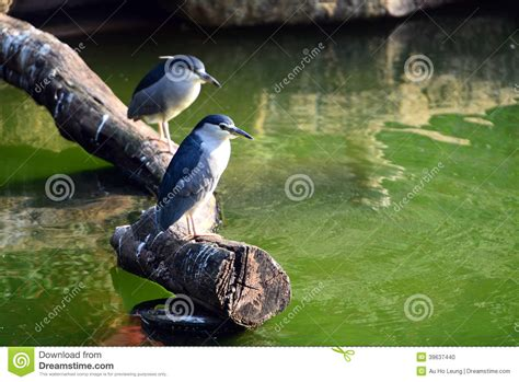 birds stand on the wood stock photo image 39637440