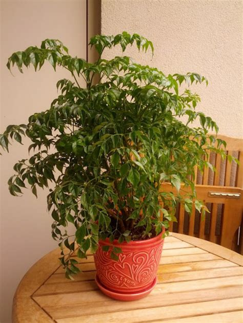 Indoor Plants No Sun help needed identifying a plant