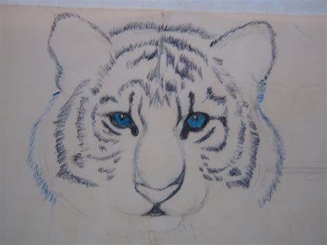 imagenes de amor para dibujar con lapicero tigre azul dibujo a lapiceros arte taringa