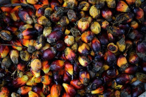 Minyak Kelapa Di Pasar oktober produksi dan ekspor sawit melonjak katadata news