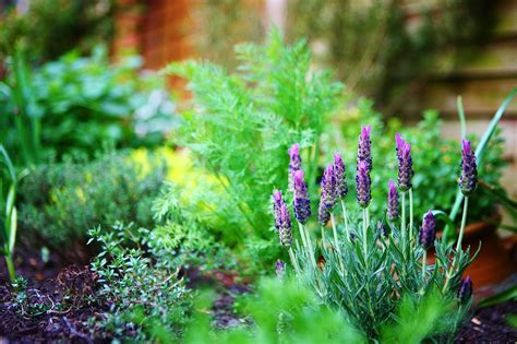 herbal garden famous quotes herb garden quotesgram