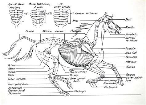 anatomy coloring book bones anatomy i mikki senkarik