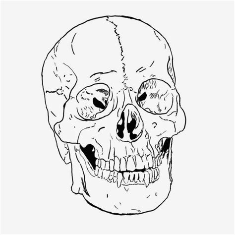 anatomy coloring book skull scary skull coloring pages coloringsuite