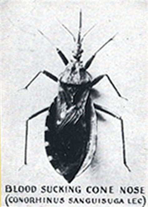 flying bed bugs flying bed bug