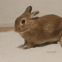 rabbit bathroom gif bunny bathroom gif 28 images bunny bathroom gif rabbit
