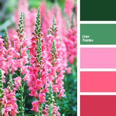 matching colours with pink color palettes on color palettes orange color palettes and color combinations