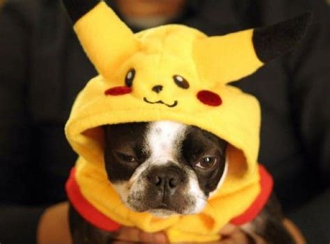 pikachu puppy pikachu animals