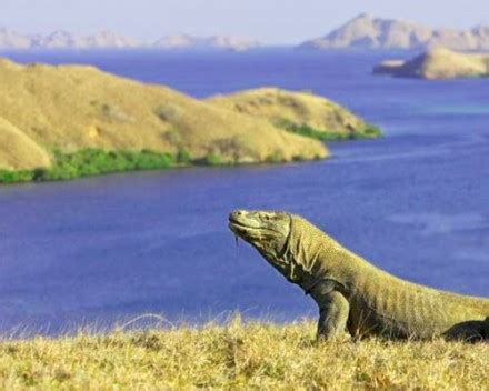 The Best Of Komodo Trek Tour 3d2n Min 2 Pax endangered indonesia explore the world before you die