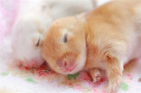 50 Incredibly Cute Baby Animal Pictures around the World