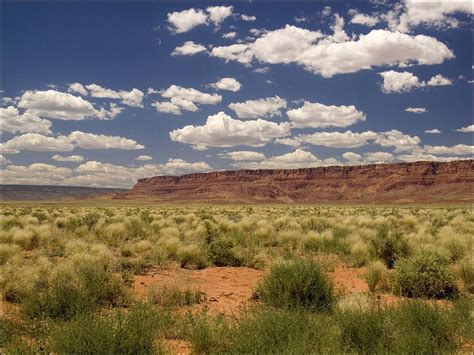 arizona landscape by phil