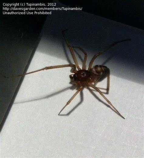 Garden Spider San Diego Insect And Spider Identification Spider Id San