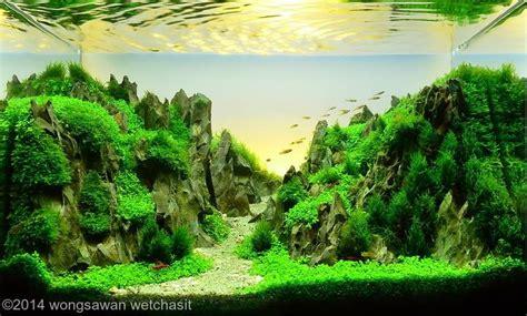 aquascaping materials 264 best aquarium images on pinterest aquarium ideas