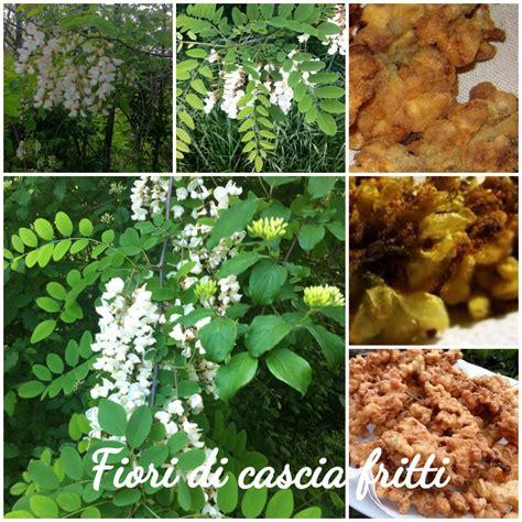 fiori d acacia fritti fiori d acacia fritti