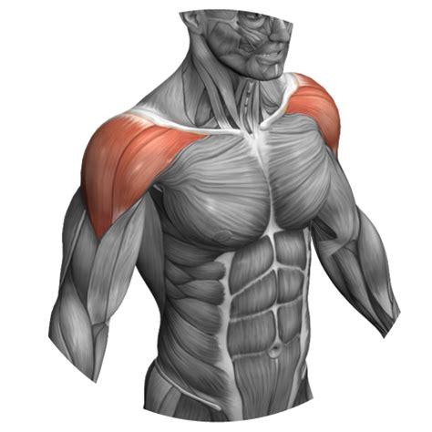 allenare pettorali interni miglior esercizio per pettorale interno ed esterno