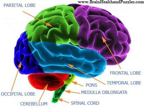 The brain geek parts of the brain