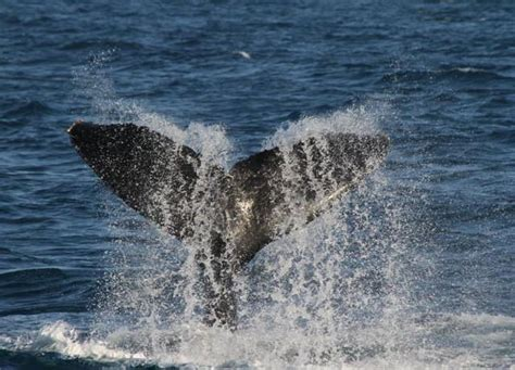 jet boat sunshine coast mooloolaba jet boat whale watching