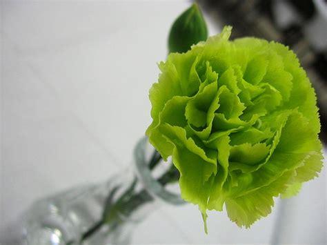 fiori color verde 5 fiori per un bouquet di matrimonio bianco e verde