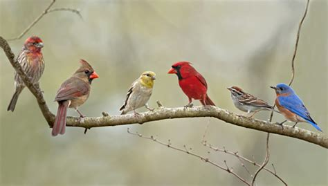 types of backyard birds determining the different bird species