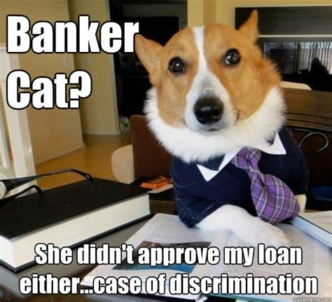 Lawyer Dog Meme - banker cat she didn t approve my loan either case of