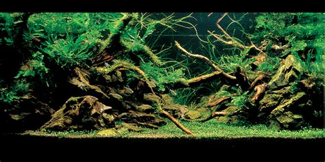 aquascapes aquarium introduction to aquascaping november 2012
