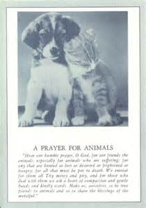 Loss of cat prayer quotes