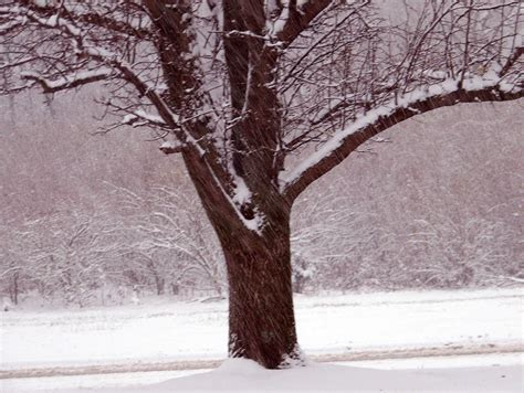 snowing on tree free stock photo public domain pictures
