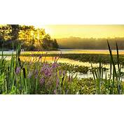 Sunrise Lake Webster Is A Fresh Water Located In